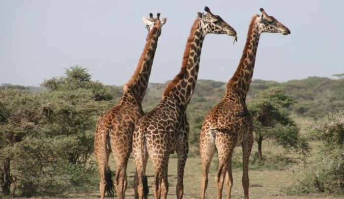 Tanzania Attractions