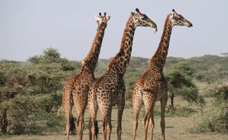 Tanzania Attractions