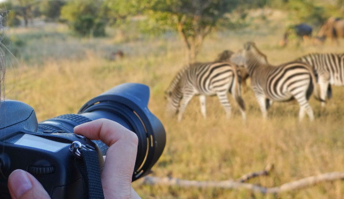 best safari cameras