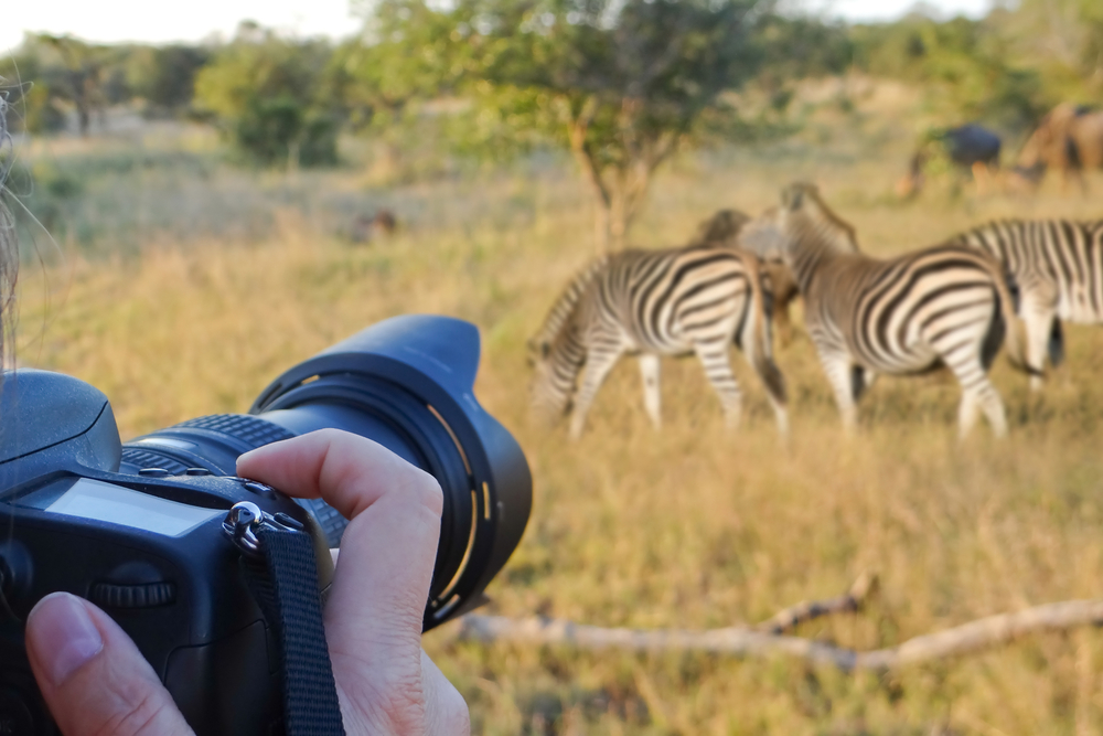 best safari cameras