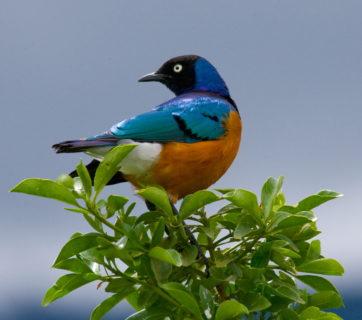 birding camera