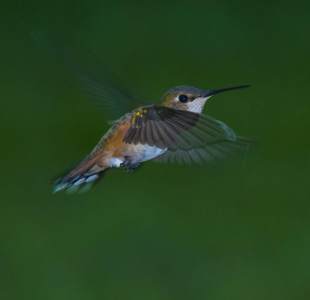 beautiful bird photo- best camera to use