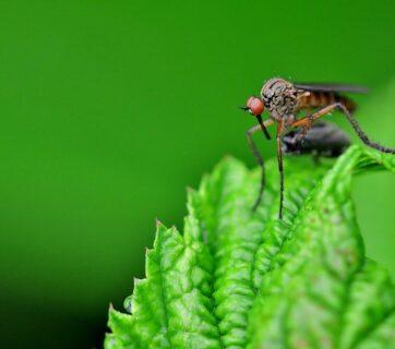 Mosquitoes and Malaria During Safari