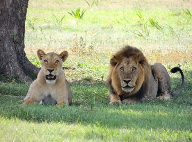 Serengeti and Masai Mara Safaris